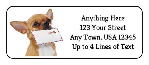 "60 Chihuahua Dog ""GOT MAIL?"" Puppy GLOSSY Photo Quality Return Address Labels"