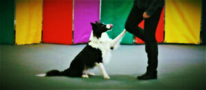 Dog Training- Sports and Fitness