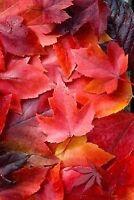 Leaf the raking to us!
