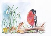 Bird Watercolours