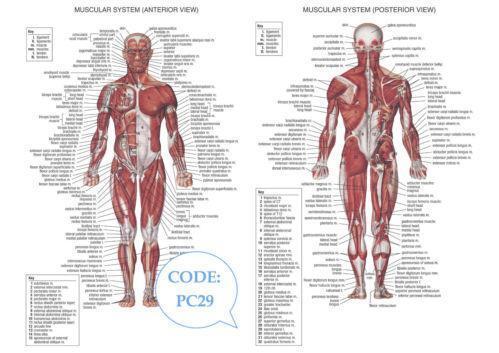 Medical Poster | eBay