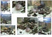 Aquarium Würfel