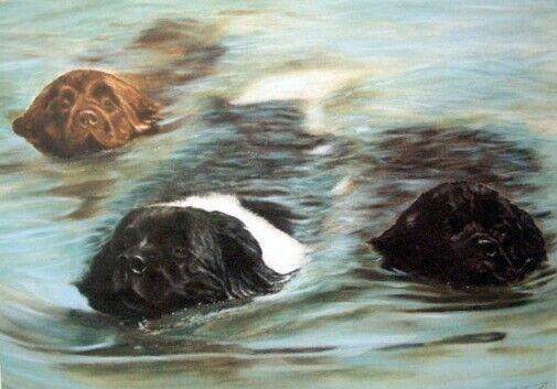 Newfoundland Dog Newf Limited Edition Art Print Waterbabies by Steven Nesbitt*