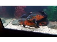 Fishes & items for sale