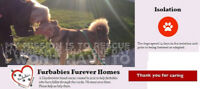 Furbabies Furever Homes Society/Registered
