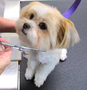 Dog grooming with comfort!