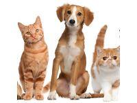 Friendly Dogwalker/Pet Sitter in Nothing Hill 12GBP / hour