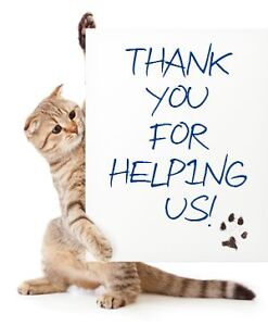 VOLUNTEER PHOTOGRAPHER FOR CAT RESCUE...MUST LOVE CATS London Ontario image 1