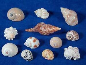 Coloured Seashells-Starfish-BRAND NEW AND SEALED BASKET