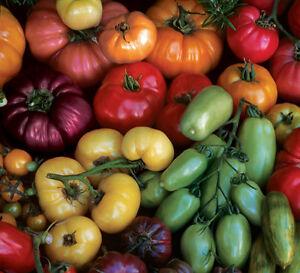 TOMATO 'Heirloom Mix' 20 seeds green red pink fruit vegetable garden heritage
