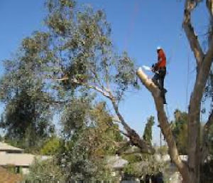 TREE REMOVAL & Fall Clean up