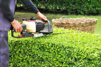 Lawn mowing, edging, hedge trimming and cutting/ trimming trees