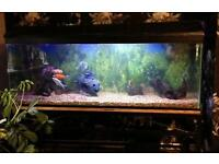 4 ft fish tank with stand complete setup