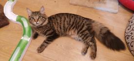 Mix breed Kitten