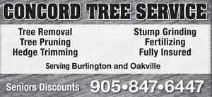 TREE REMOVAL / PRUNING / STUMP GRINDING / OAKVILLE TREE  SERVICE Oakville / Halton Region Toronto (GTA) image 1