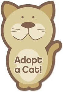 Looking to adopt cat or kitten
