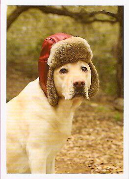 Lab Labrador Retriever Dog in Hat Christmas Cards Box of 10