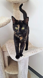 Beautiful Cats & Kittens - Fixed, Vaccinated & Microchipped!
