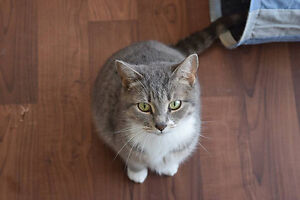Rescue Weekly Whisker Kitty!! Reduced Adoption Fee!!
