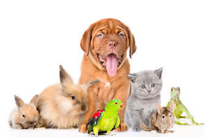 PET SERVICES, DROP-IN VISITS, DOG WALKING