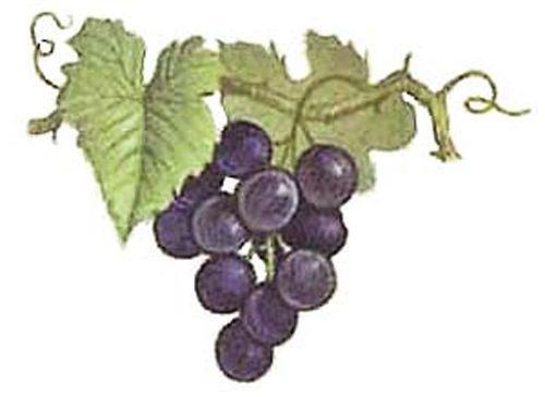 Grape Vine Decals Ebay