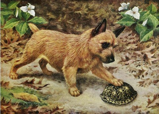 Norwich Terrier - Vintage Color Dog Print - MATTED