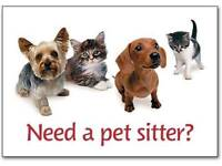 pet sitting , walking & grooming