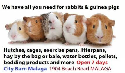 RABBITS AND GUINEA PIGS - all you need