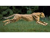 Cheetah Removal &Couriers