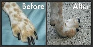 In home pet nail clipping services