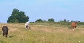 Grazing available for one horse or pony. NE Leics