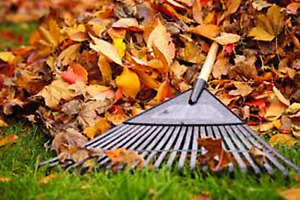 Fall Leaves Cleanup & Snow Removal