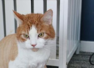 Poor Rikiki is looking for a home