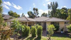 Large collie home to swap for similar in Mandurah or surrounding. Collie Collie Area Preview