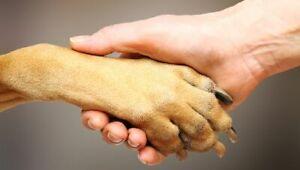 J-Dogs Pet Services