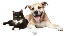 In Your Home - Pet Sitting Elwood Port Phillip Preview