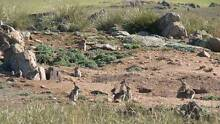 rabbit hunting property wanted Bakery Hill Ballarat City Preview