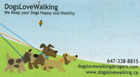 Dog Walking and In Home Boarding Mid Town Toronto