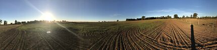 Contract hay cutting dubbo