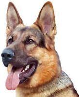 Cours de dressage de chien privée