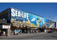 Adult 1 day entry to Sealife Blackpool