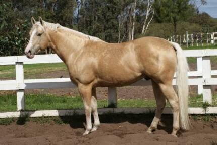 HORSES FOR RIDING SCHOOL Brookdale Armadale Area Preview