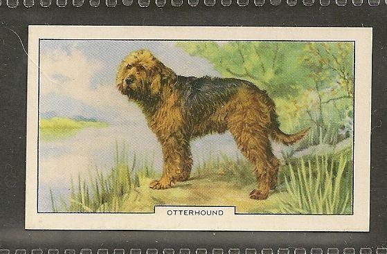Rare 1938 UK Dog Art Full Body Gallaher Series 2 Cigarette Card OTTERHOUND