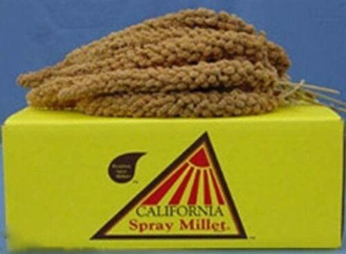 Spray Millet 5lb
