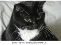 Missing male cat responding to ~TOM~.Black and White very friendly