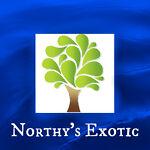 northys_exotic