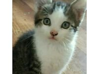 2 KITTENS TO BE HOMED TOGETHER