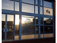 Dog Grooming Salon Business for Sale in Ipswich, Suffolk