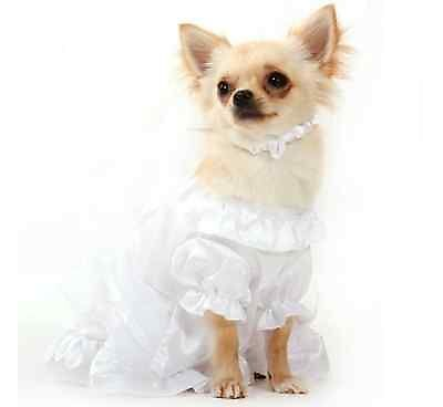Nowadays we dress animals up in lavish outfits