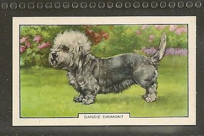 1938 UK Dog Art Full Body Study Gallaher Cigarette Card DANDIE DINMONT TERRIER